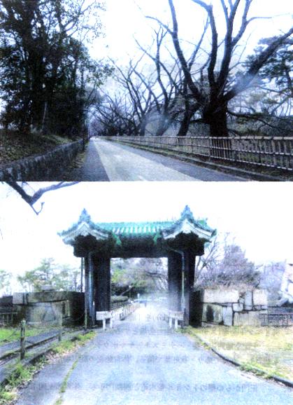正門から櫻トンネル並木道(街路樹)から体育館へ